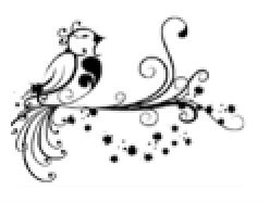 Oiseau-lyre- Petit